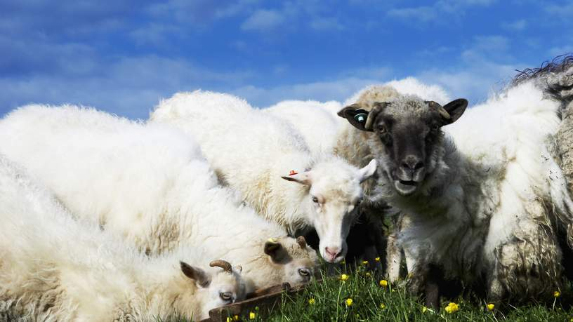 Jacob Eskilden