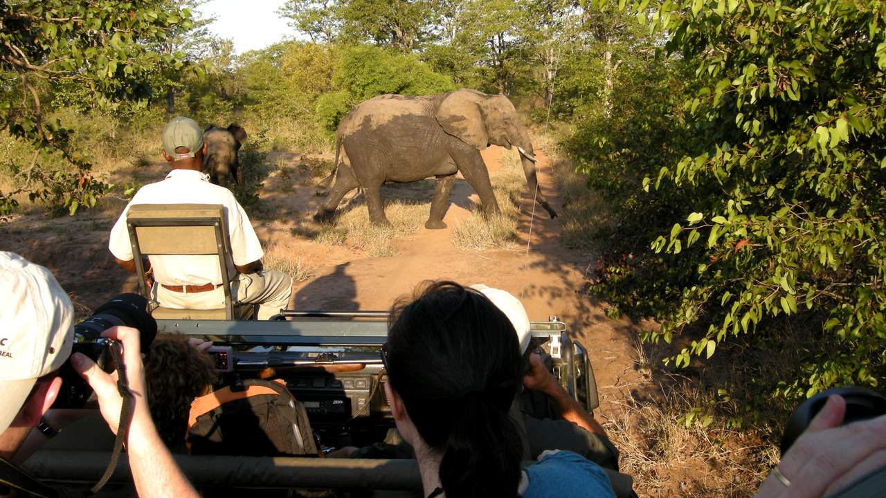 Gamedrive in Timbavati Private Game Reserve, Zuid-Afrika